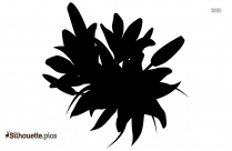 Cornflower Flowers Silhouette Picture