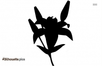 Black And White Lily Flower Silhouette