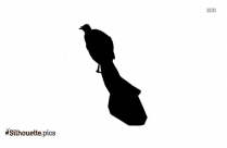 Tailed Hawk Bird Silhouette Vector