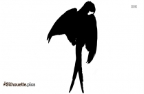 Macaw Parrot Cartoon Silhouette