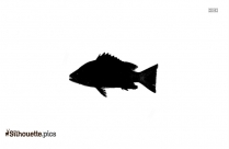 Longfin Silhouette Vector And Graphics