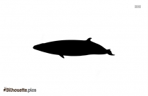 Minke Whale Silhouette Illustration
