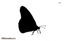 Beautiful Butterfly Silhouette Picture