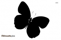 Most Beautiful Butterfly Drawings Silhouette Icon