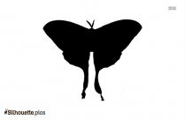 Moth Silhouette Picture