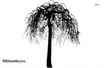 Mangifera Indica Mango Tree Silhouette