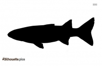 Cartoon Mullet Fish Silhouette Image