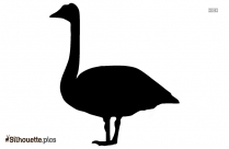 Swan Drawing Silhouette Picture