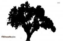 Robinia Pseudoacacia Tree Silhouette