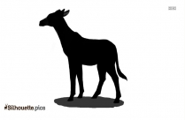 Okapi Silhouette, Forest Giraffe Silhouette Image For Download
