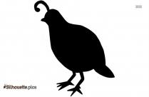 Bird Bill Silhouette