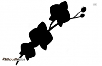 Orchid Flower Silhouette Drawing