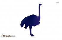 Ostrich Silhouette Emu