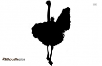 Ostrich Silhouette African Ostrich
