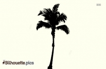 Palm Tree Silhouette Images