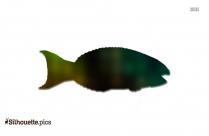 Parrot Fish Pirates Silhouette