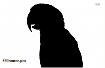 Macaw Parrot Silhouette Vector