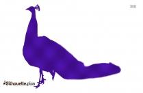 Peacock Blue Silhouette