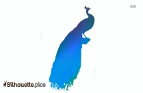 Peacock Sitting Silhouette