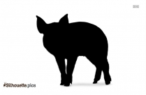 Domestic Pig Silhouette