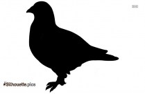 Cute Pigeon Outline Silhouette
