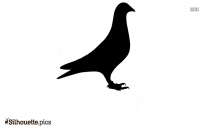 Pigeon Silhouette Vector And Graphics