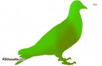 Pigeon Transparent Background Bird Image