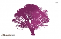 Woodland Tree Drawing Silhouette