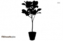 Tropical Plant In Vase Silhouette