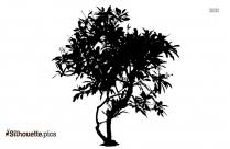 Plumeria Alba Plant Silhouette