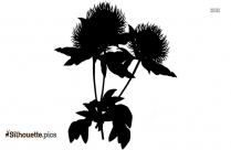 Gardenia Silhouette Vector And Graphics