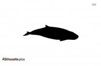 Sperm Whale NOAA Fisheries Silhouette