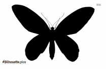 Queen Butterfly Silhouette