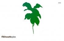 Rainforest Coffee Plant Silhouette