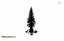 Redwood Tree Silhouette Background