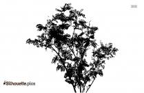 Cherry Blossom Black And White Silhouette