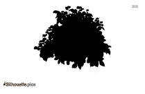 Daisy Flower Silhouette Image And Vector