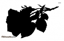Green Rose Flower Silhouette Image