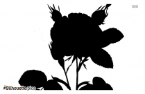 Rose Plant Silhouette Art