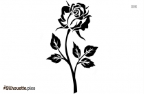 Black And White Rose Silhouette Picture