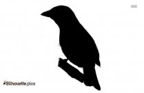 Pigeon Silhouette Image, Dove Wallpaper