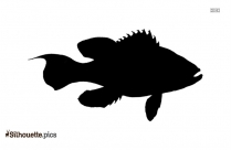 Cusk Fish Silhouette Vector And Graphics