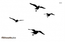 Sea Bird Flying Bird Silhouette