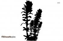 Sea Kelp Plant Silhouette Picture