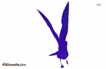 Seagull Bird Silhouette Vector And Graphics