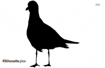 Seagull Silhouette Vector