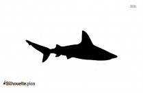 Cobia Fish Silhouette In White Background