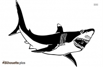 Shark Drawings Silhouette Picture