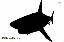 Killer Fish Silhouette