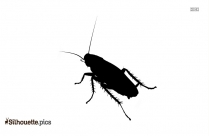 Silhouette Of Cockroach